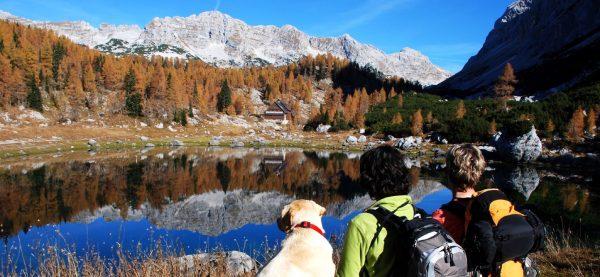 lechtaler-hof_vacances-chiens