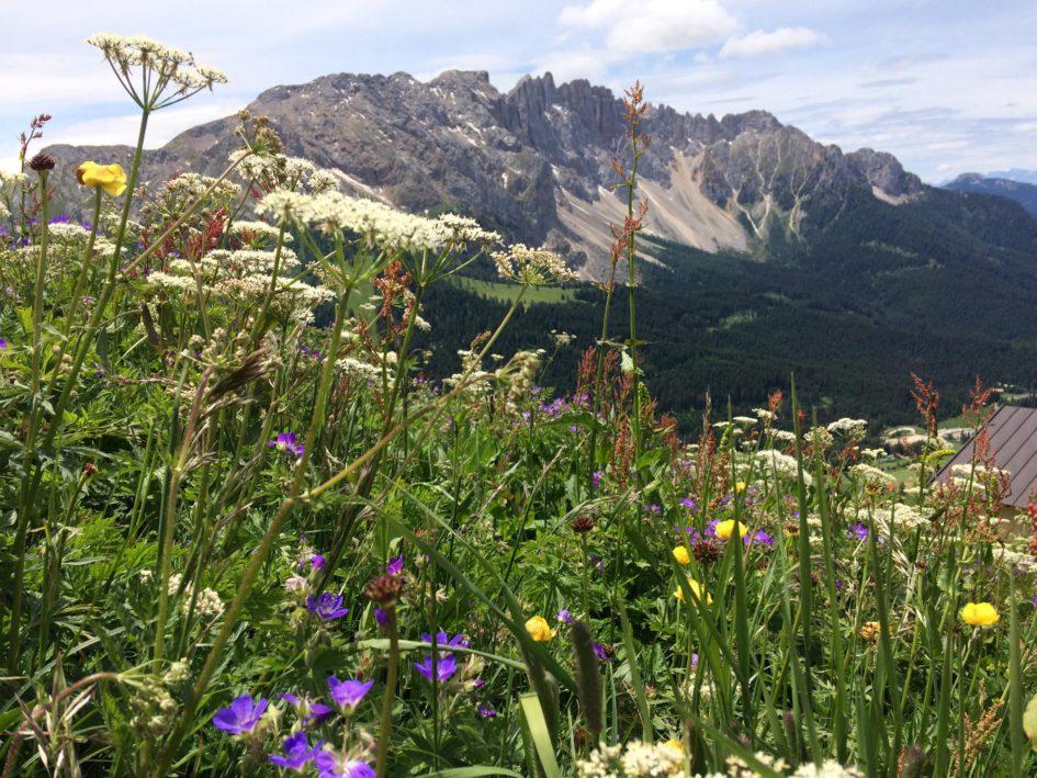 Vue sur les Dolomites et la vallée Eggental © Natalie Lantos